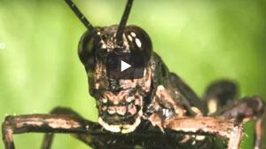 100個昆蟲行為觀察主題_《嘎嘎老師的昆蟲觀察記》